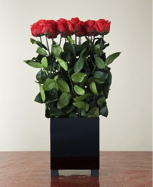 Стабилизированная роза купить